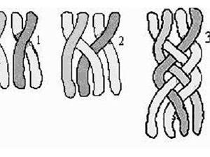 Коса из четырех прядей